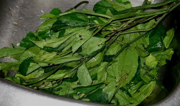 fresh ugu leaves